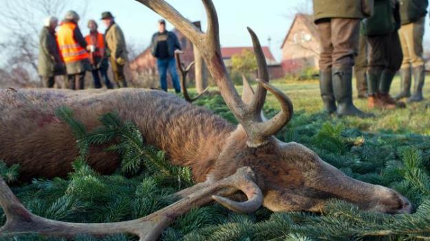 Jäger oder Gejagte? © ZDF